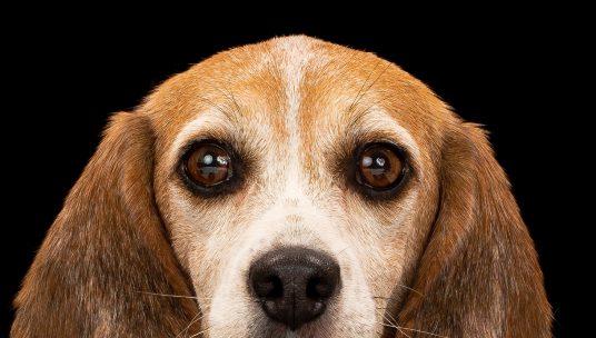 USDA Scrubs Public Animal Welfare Records From Website