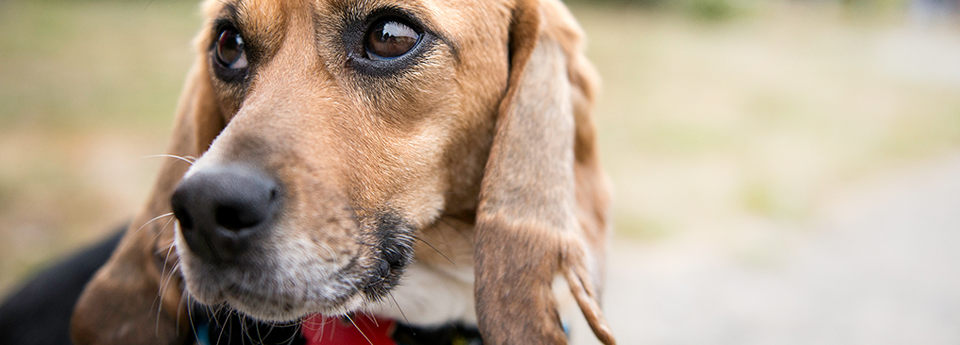 Marshall Pet Products EXPOSED! – Beagle Freedom Project