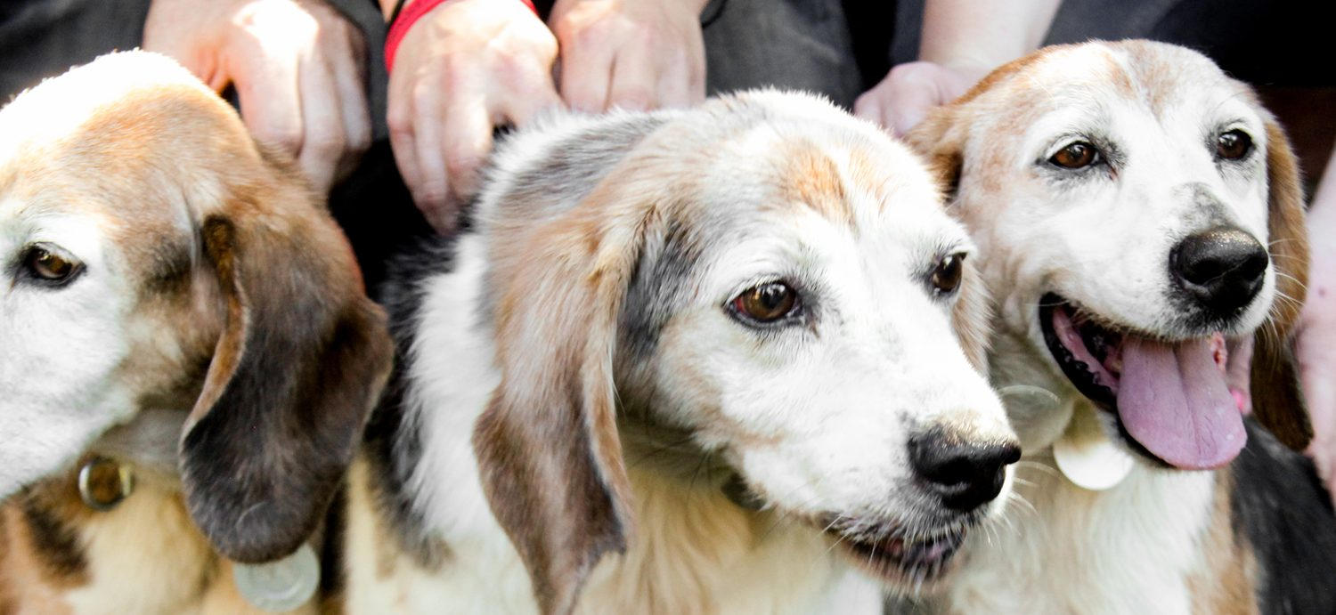 Rescuing The Grampas - How BFP Rescued 14 Year Old Seniors from A Life of Hell