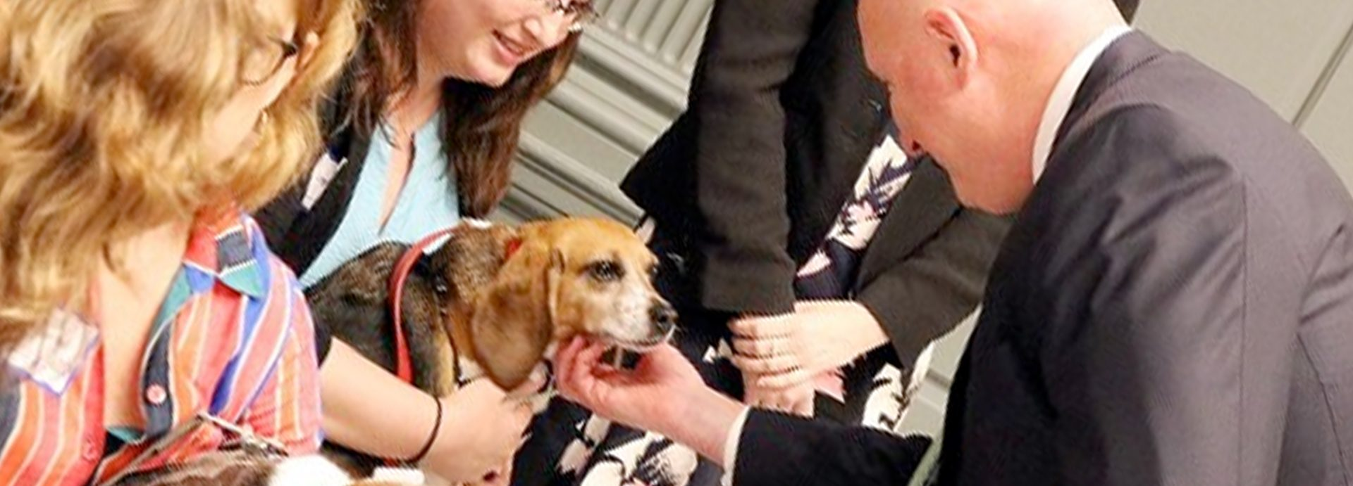 Bill spares lives of research dogs, cats