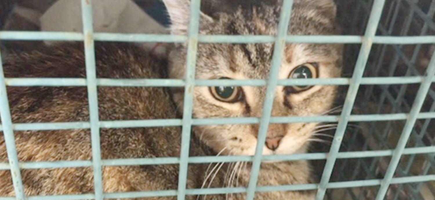 Delaware bill ordering research labs to release retired cats & dogs passes Senate