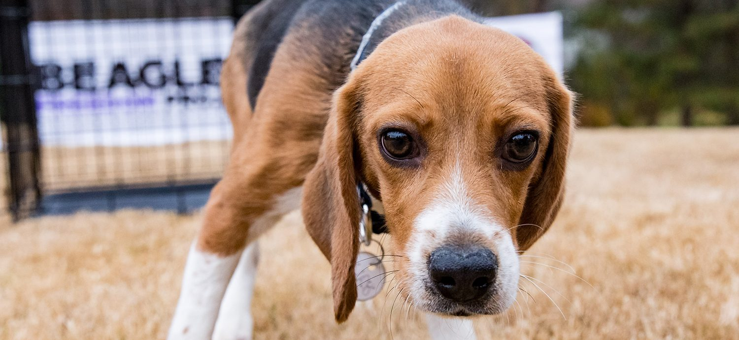 Delaware Passes Law Requiring Laboratories to Retire Animals So They Can Find Loving Homes After Tests