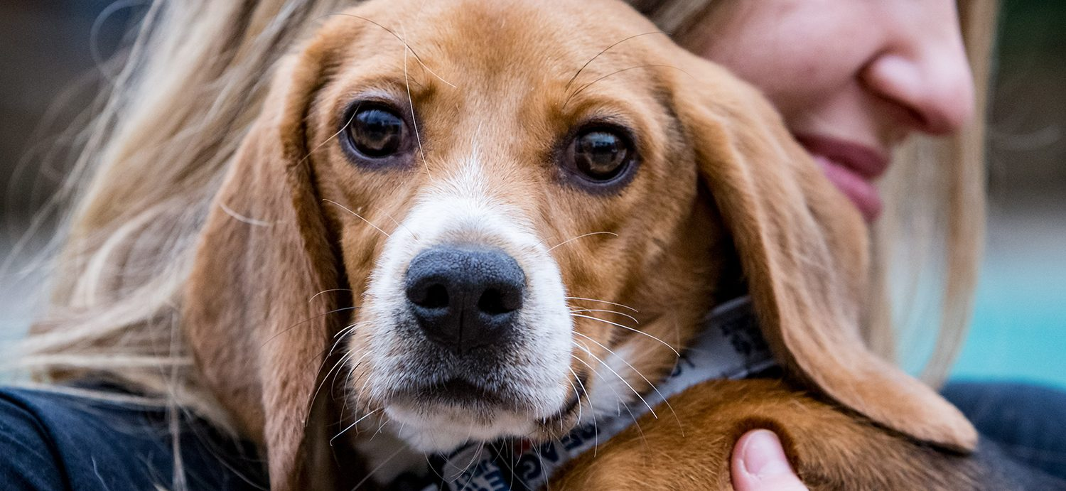 Massachusetts Senate passes bill to promote adoption of research animals