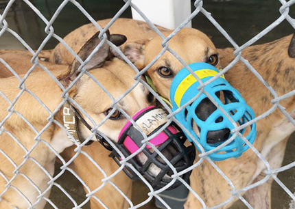 Dogs used at blood bank facility