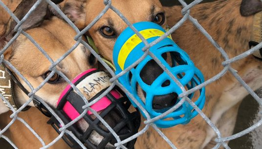 Assemblymember Bloom Reintroduces Legislation to Modernize Animal Blood Banking in California