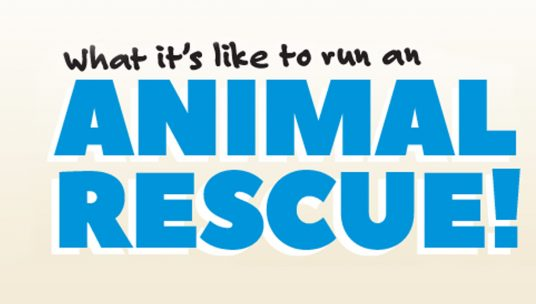 What it's like to run an animal rescue!