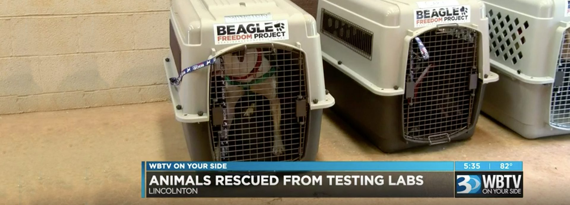 Laboratory animals from Mexico getting fresh start in NC