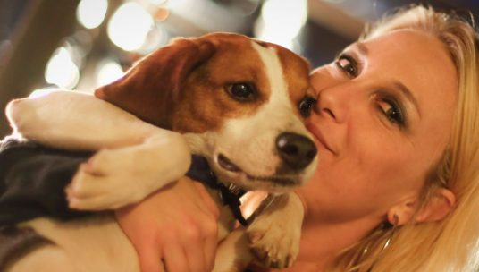 Hope for Thousands of Beagles Used in Laboratory Experiments
