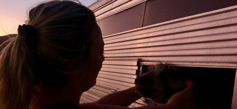 Beagle Ark