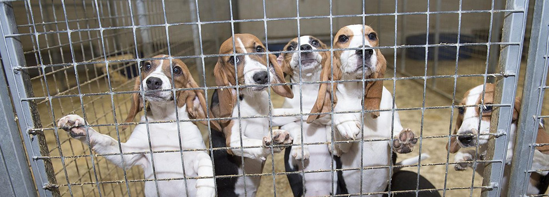 EPA announces Animal Testing phase out