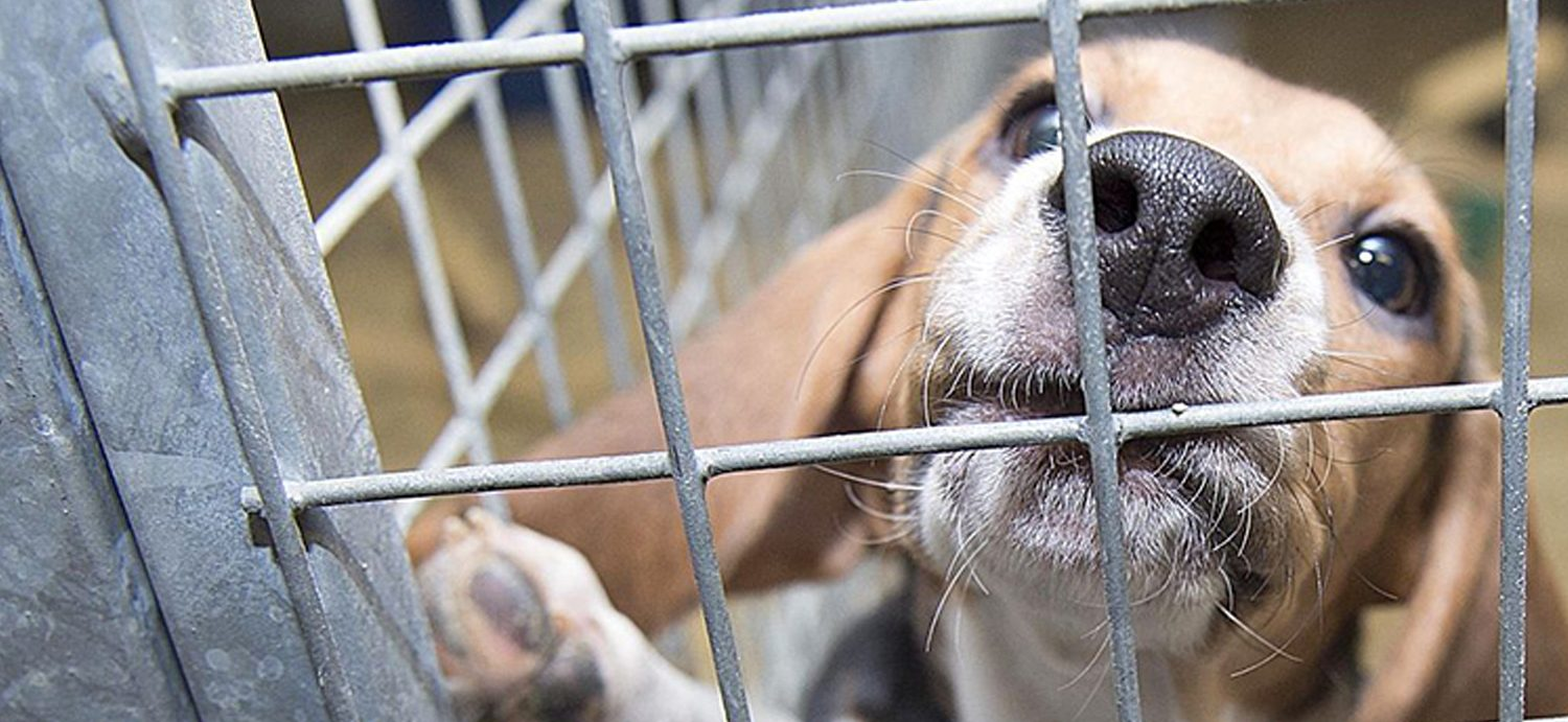 'They are living, breathing creatures': EPA plans to eliminate animal testing
