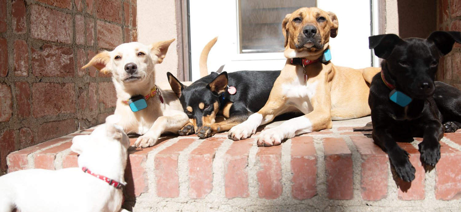 Dogs rescued from Mexico animal testing facility get new leash on life
