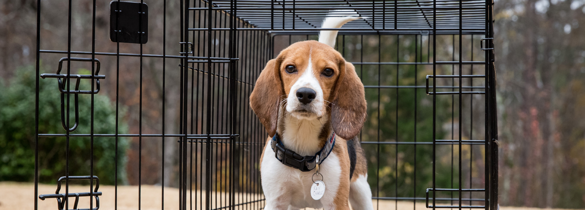 Beagle Freedom Bill provides for adoption after lab research is over