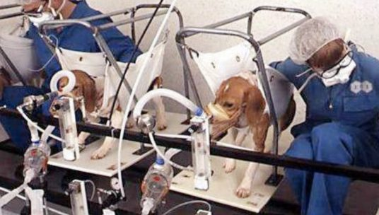 Photo Reveals a Horrific Day in the Life of a Lab Beagle – Here's What We Can Do to Help