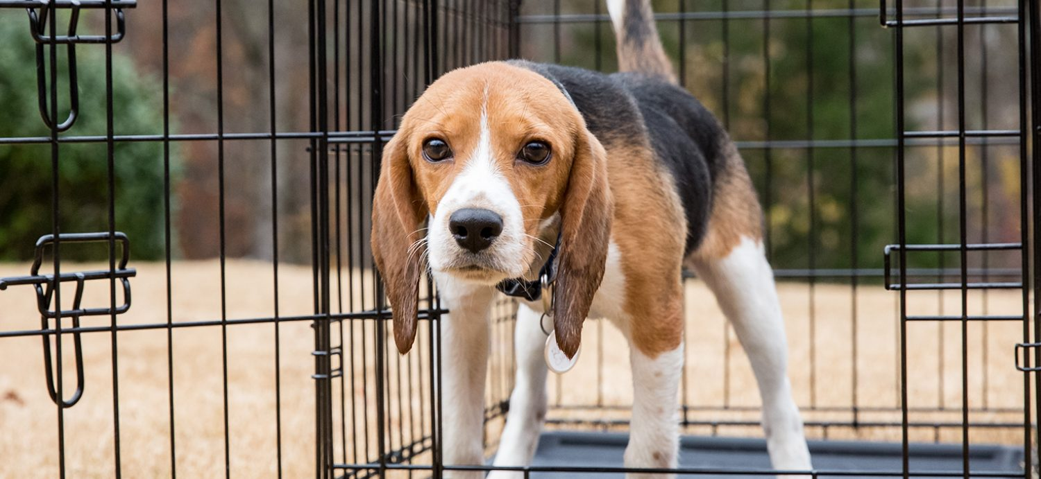 How to Combat the USDA's Animal Welfare Blackout