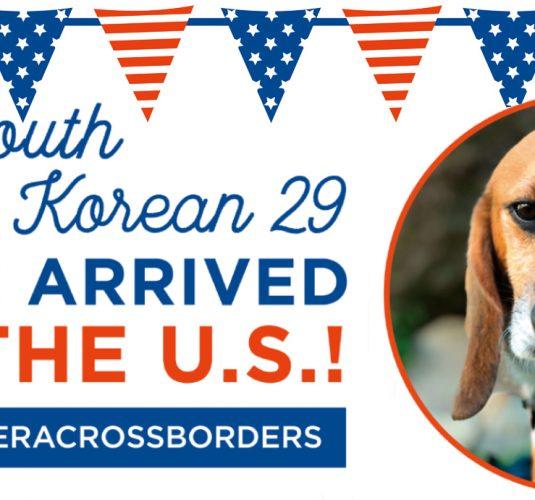 South Korean 29